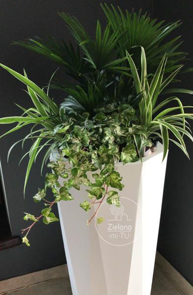 rośliny dodomu