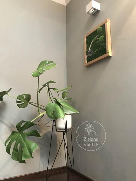 rośliny downętrza