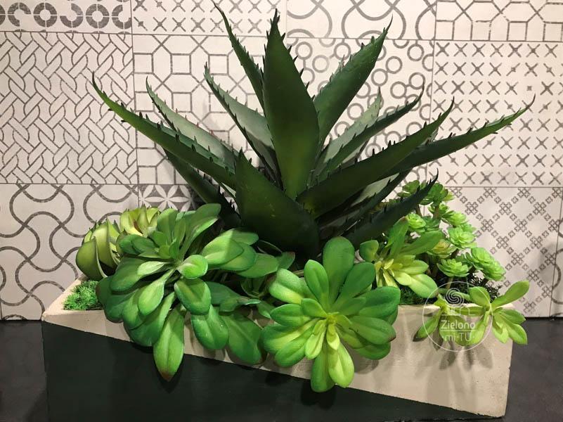 rośliny ozdobne