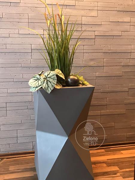 rośliny wdonicach